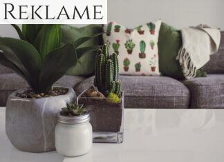 Planter på sofabord
